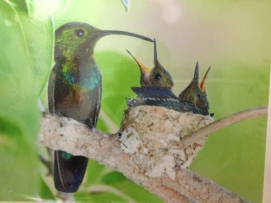 Black Sparrow Nest view